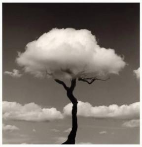 arbol-nube