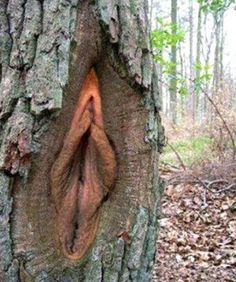 clitoris-arbol